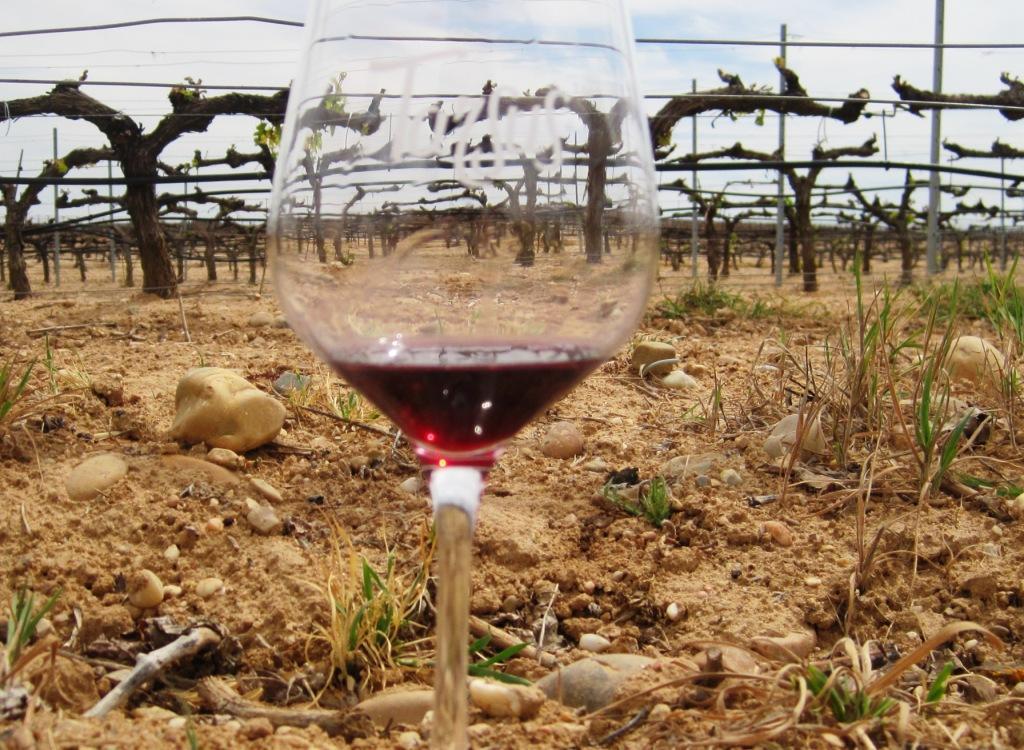 Copa de vino y cepas